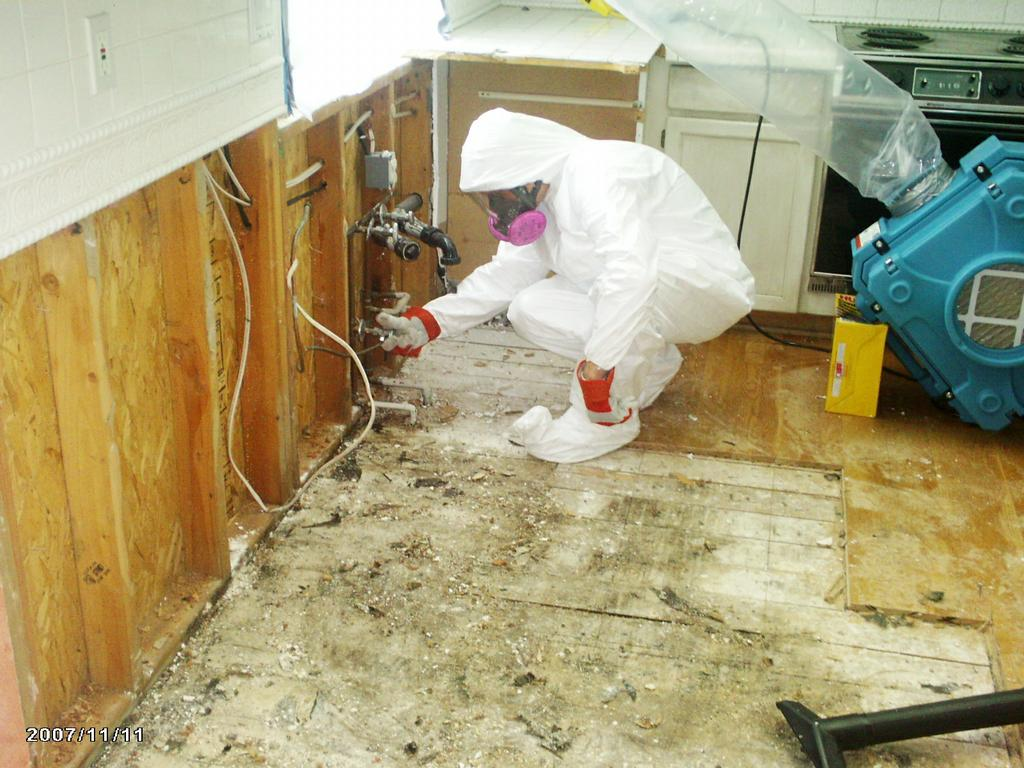 Hiring a Mold Removal Contractor Indilens News Team ! Live Daily ...